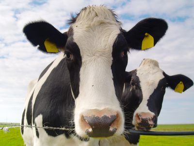 Milk Causes Osteoporosis