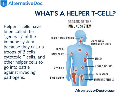 Infograhic – What Are Helper T Cells?