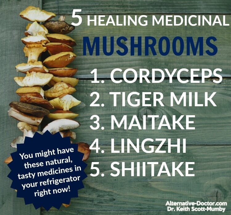 benefits-of-medicinal-mushrooms-IG