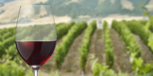 Can Wine Prevent Cancer?