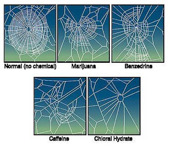 spider-webs-caffeine