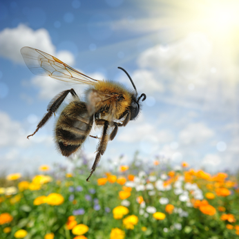 Can Bee Sting Venom Cure Parkinson's Disease?