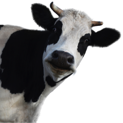cow-most-important-supplements