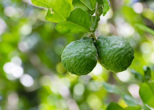 Boost Your Heart Health with the Benefits of Bergamot