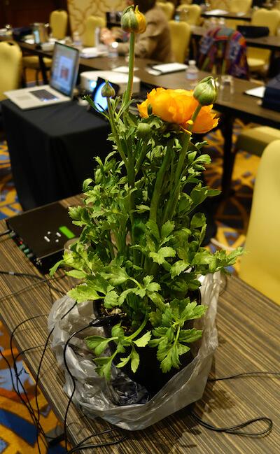 medicine-beyond-seminar-singing-plant