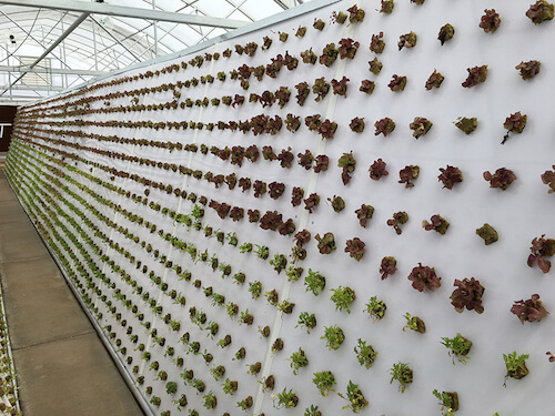 renegade-gardening-resources-garden-wall