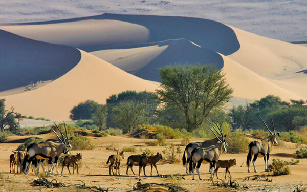 profs-african-travels-namibia-21334484-1462808081-ImageGalleryLightbox