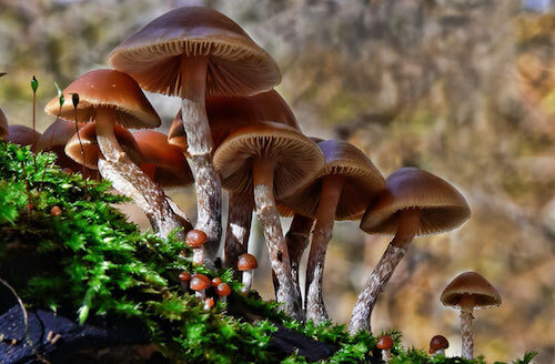 The Dangers of Fungi – Does Fungi Kill More People Every Year Than Malaria?