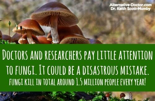 dangers-of-fungi-autumn-skullcap-ig