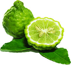 dangers-of-statins-bergamot