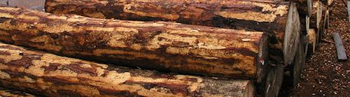 disgusting-ingredients-wood