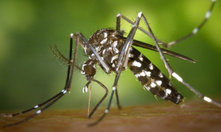 Why You Can't Forget Your Natural Mosquito Repellant!