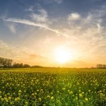 Use Vitamin D to Improve Lung Health