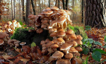Mushrooms Could Save The World AND Taste Good