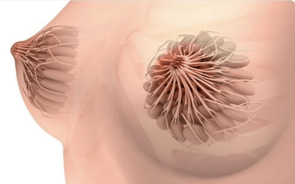 nipple ducts